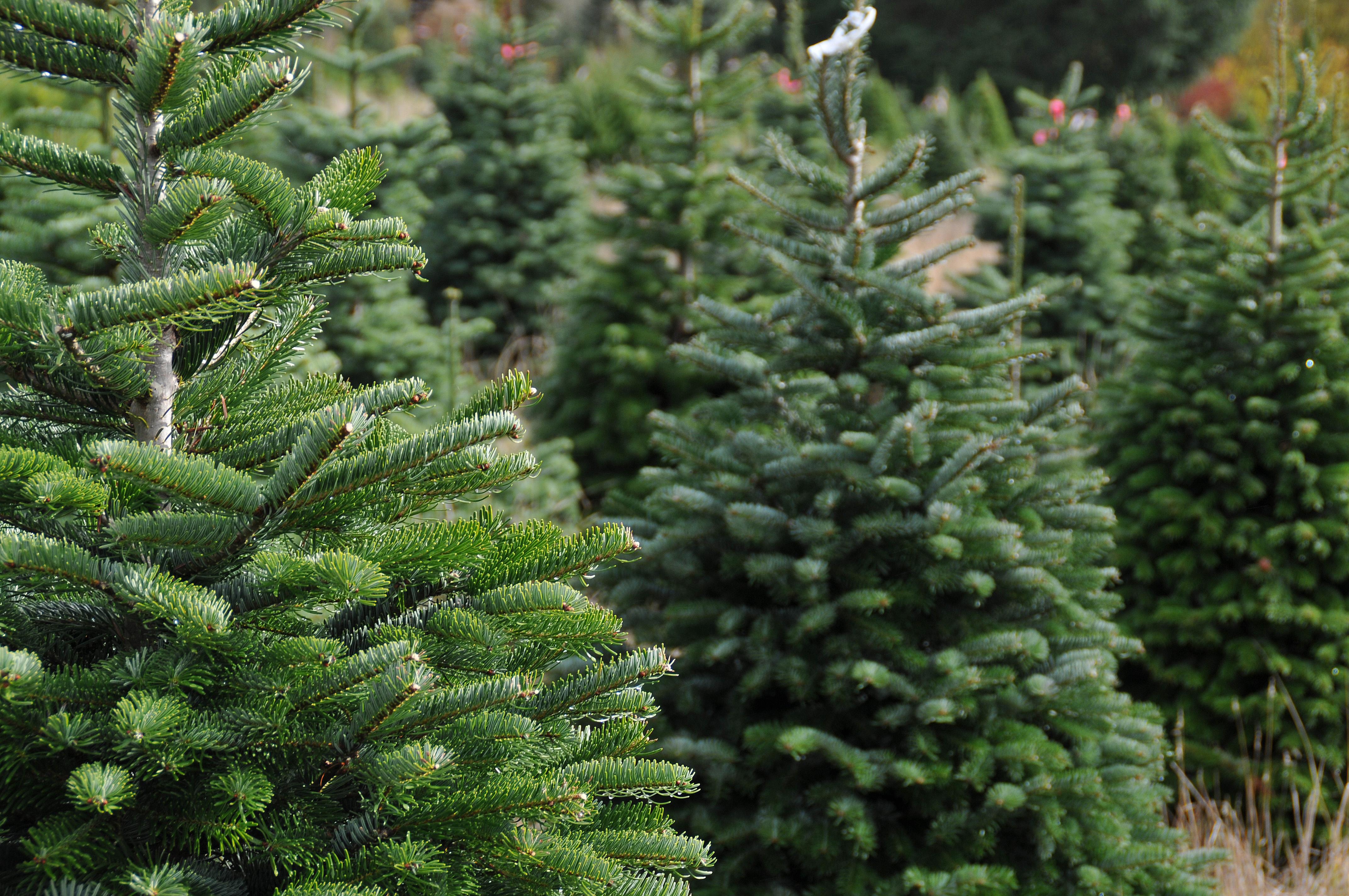 Giant Artificial Christmas tree